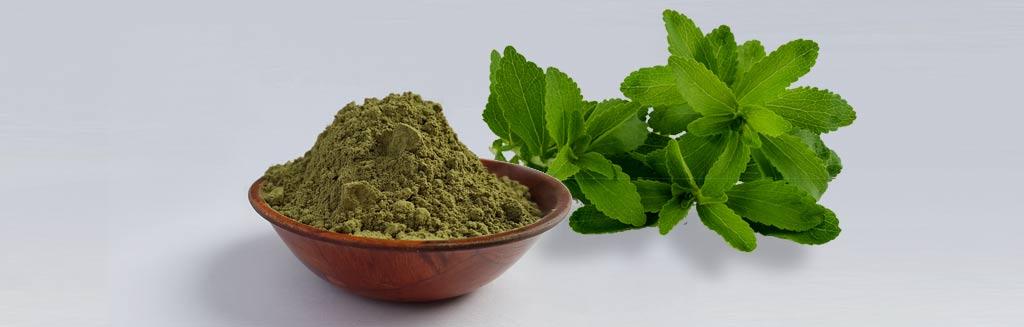 Stevia Blätter und Steviapulver